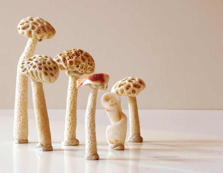 Caterina Aicardi, opere, scultura, natura, art, spugne, spugna, funghi, mushroom